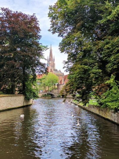 Swans in the Canal Water Architecture Tree Built Structure Building Exterior Day Outdoors Reflection River Waterfront No People Nature Flood Sky cathedral church river canal