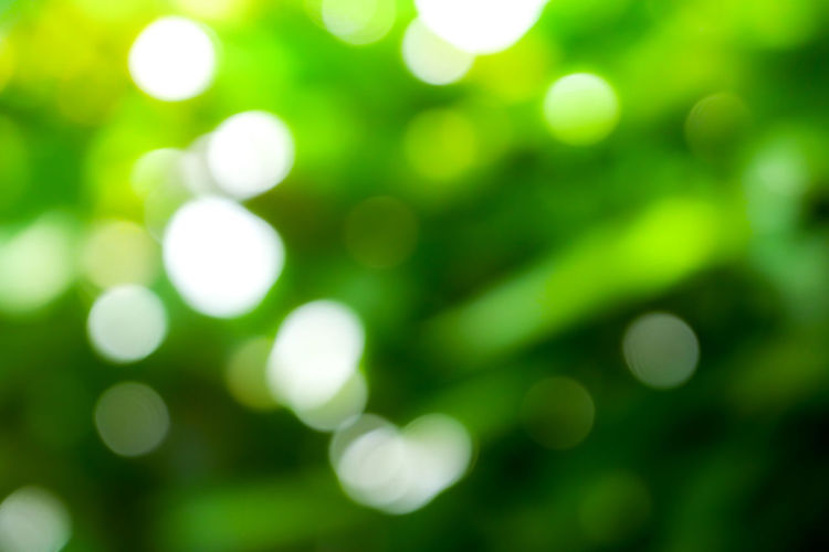 Defocused Backgrounds Green Color No People Abstract Plant Nature Growth Outdoors Beauty In Nature Light - Natural Phenomenon Pattern Full Frame Lens Flare Close-up Day Shiny Selective Focus Tranquility Glowing Abstract Backgrounds Light Bright Soft Focus