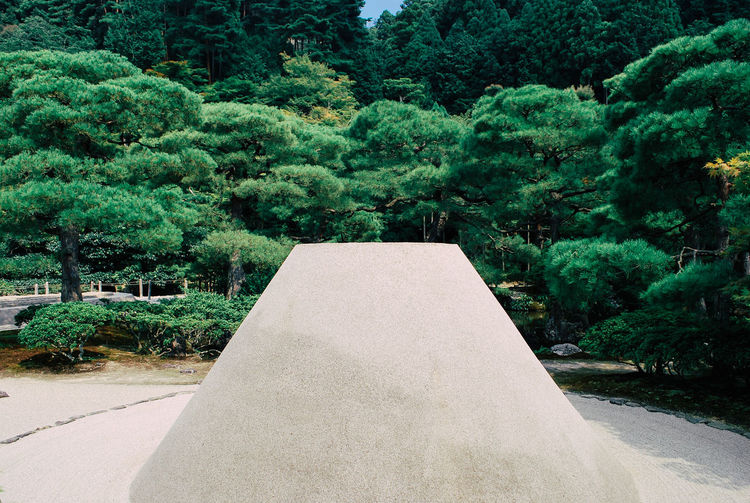 Zen Aesthetics of the Mount Fuji Japanese Garden Mount FuJi Architecture Beauty In Nature Day Foliage Forest Formal Garden Fuji Garden Garden Path Green Color Growth Hedge Lush Foliage Nature No People Ornamental Garden Outdoors Park - Man Made Space Plant Sand Tranquil Scene Tranquility Tree
