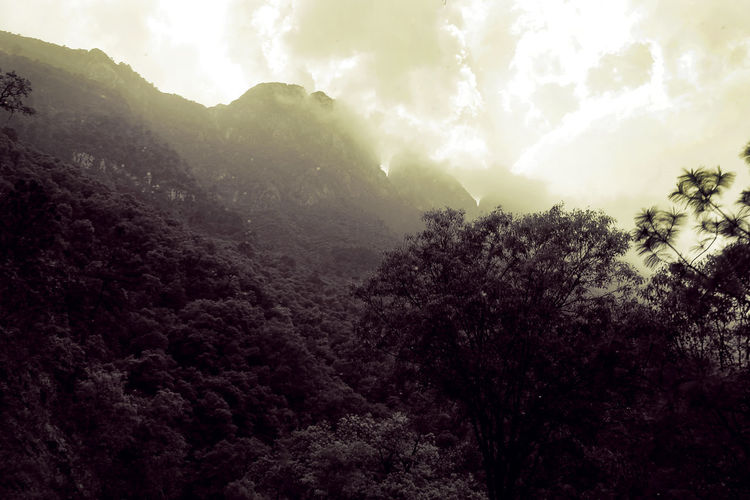 "View of the ""m"" of the Sierra Madre mountain, from San Pedro Garza García Nuevo León in México. Black & White Mexico Mountain View Nature Nature Photography Sierra Madre Oriental Beaitiful Beauty In Nature Cloud - Sky Environment Forest Go Higher Growth Mountain Nature No People Non-urban Scene Nuevo Leon Outdoors Plant Scenics - Nature Sky Tranquil Scene Tranquility Tree"