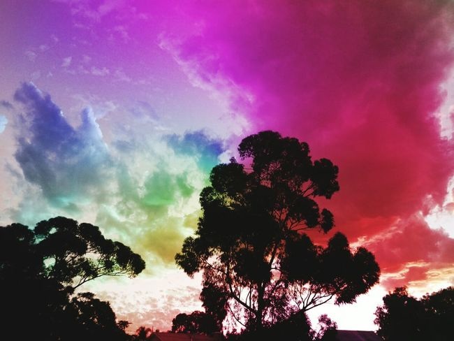 Tree Astronomy Multi Colored Forest Silhouette Tree Area Mountain Dramatic Sky Sky Cloud - Sky