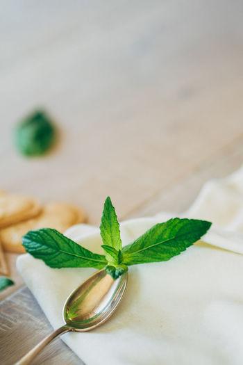 Mint Leaves On Spoon