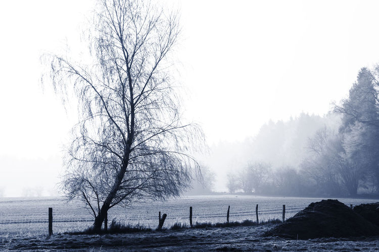 Farmland Bare Tree Beauty In Nature Branch Cold Temperature Day Farmland Fence Fog Landscape Morning Nature No People North Germany Outdoors Scenics Schleswig-Holstein Sky Snow Tranquil Scene Tranquility Tree Water Winter