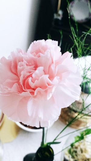 Pink Color Plant Flower Head Flower Nature Day Freshness Fragility 🌸flower🌸 Photoshoot Mothersday Momy<3 Beautiful Petal Love