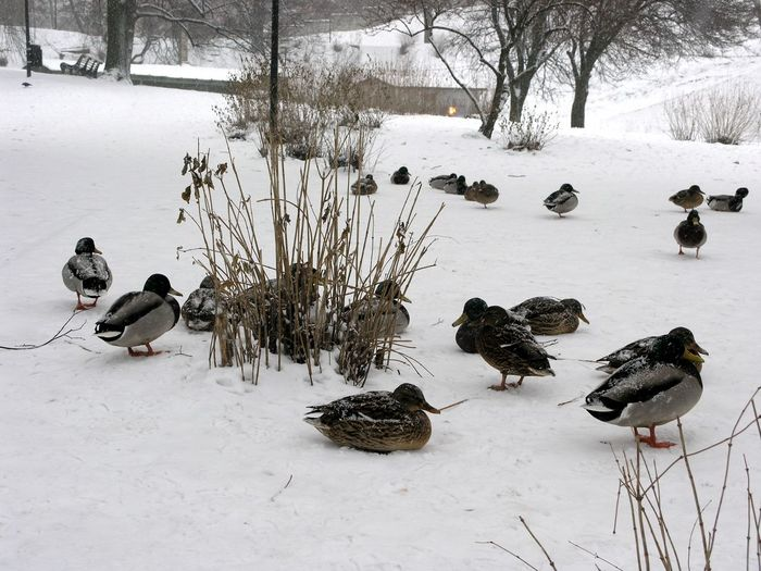 Birds on snow covered field