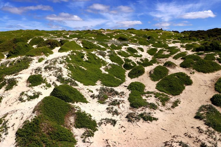 Sand dunes on the beach on Kangaroo Island, South Australia Cloud - Sky Sky Scenics - Nature Beauty In Nature No People Day Nature Plant Tranquil Scene Tranquility Land Non-urban Scene Grass Outdoors Travel Travel Photography Beach Coastal Feature Coastline Landscape Sand Dunes Environment Australian Landscape Dunes Sand Protected Area
