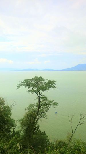 Banch in the lake Nature Tree Sky Wilderness No People Beauty In Nature Outdoors Water Nature Reserve Landscape Beach Ecosystem  EyeEmNewHere Lake View Lake Beauty In Nature Horizont  Nature_collection Feelingood Thebigblue Mountain River Hilly