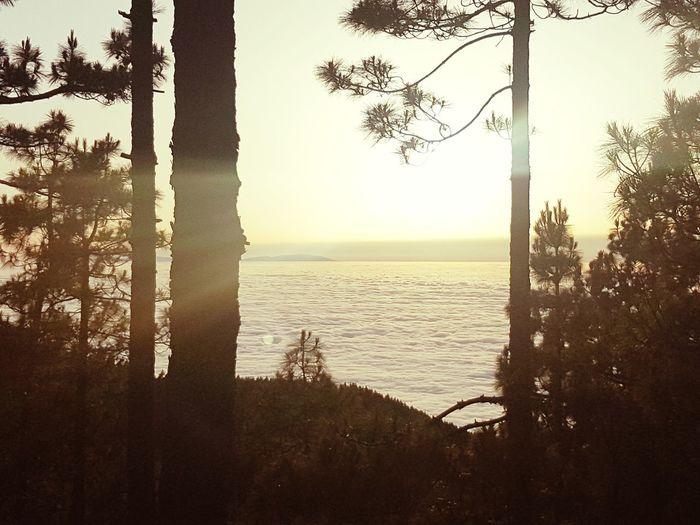 Tree Horizon
