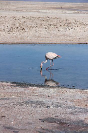 Bird in lake