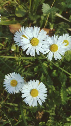 Flowers No