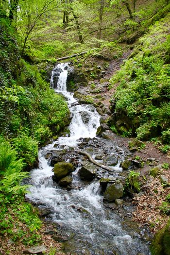 Beauty In Nature Flowing Flowing Water Forest Green Color Idyllic Moss Motion Nature No People Non Urban Scene Non-urban Scene Outdoors Plant Russia Sochi Stream Water Waterfall Красная поляна тропа здоровья