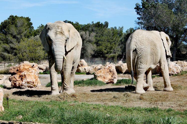 View of elephant in field