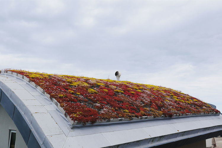 The roof. Green Roof Living Roof Sedum Sedum Plants Moss Rooftop Ecofriendly Visitor Center Architectural Feature Architecture Architecturelovers