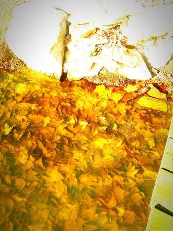 Fallbeauty Naturalbeauty Leaf 🍂 Pondography MyBeautifulLIFE