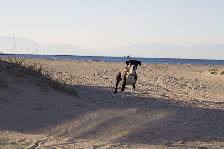 Land Pets One