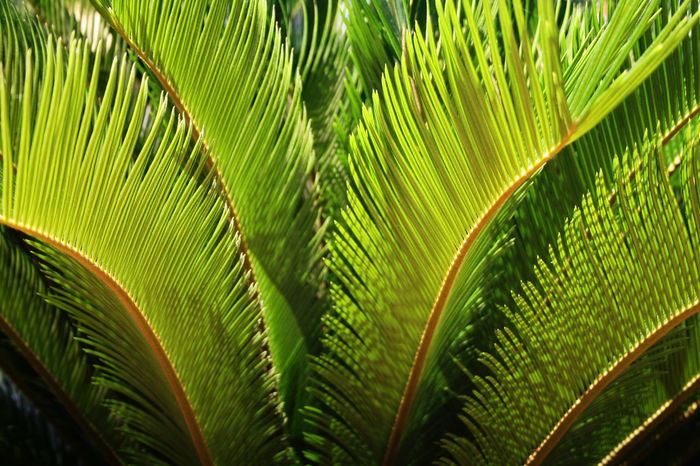 2007 Dominican Republic Dominicus Beach Beauty In Nature Close-up Day Frond Full Frame Green Color Growth Leaves Nature No People Outdoors Palm Tree Plant