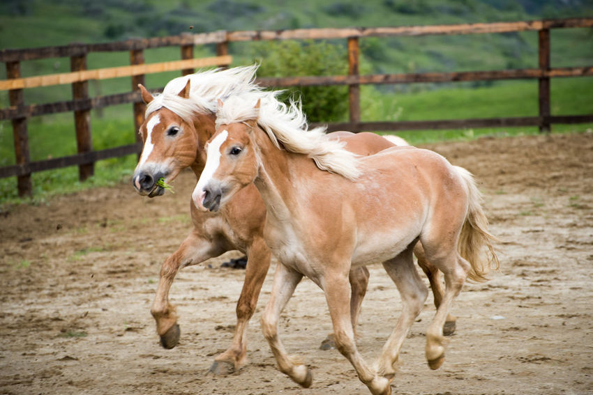 horse Animal Themes Day Domestic Animals Field Full Length Horse Livestock Mammal Nature No People One Animal Outdoors