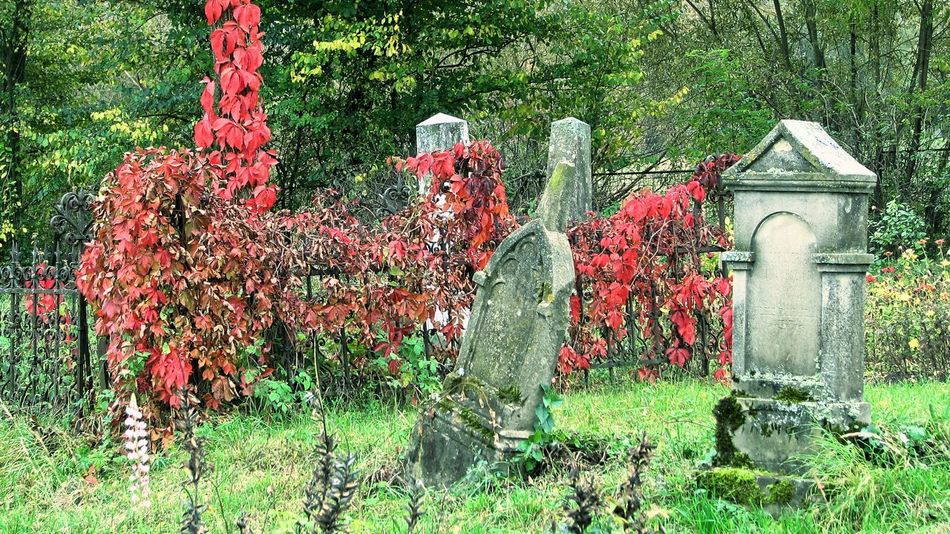 Autumn Autumn colors Cemetery Cemetery Photography Architecture Beauty In Nature Built Structure Day Flower Grass Gravestone Green Color Growth Nature No People Outdoors Plant Tombstones Tree