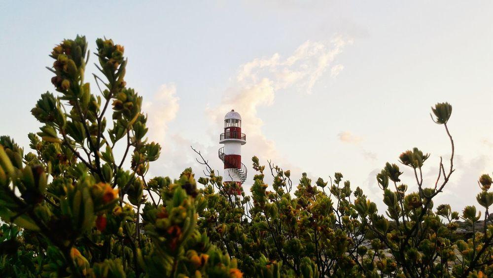 Mangrove and lighthouse Mangrove Mangroves Mangrove Plant Mangrove Island Green Botanic Botanical Sea Plant Bushes Light Lighthouse Lighthouse Tower