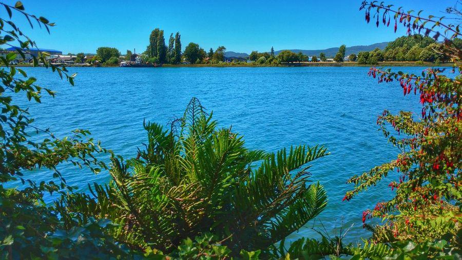 Chile River Valdivia Valdivia, Chile Water Nature CL Green Landscape