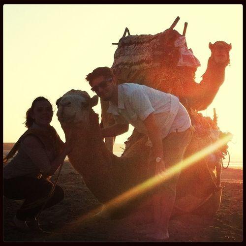 We Love Camels!