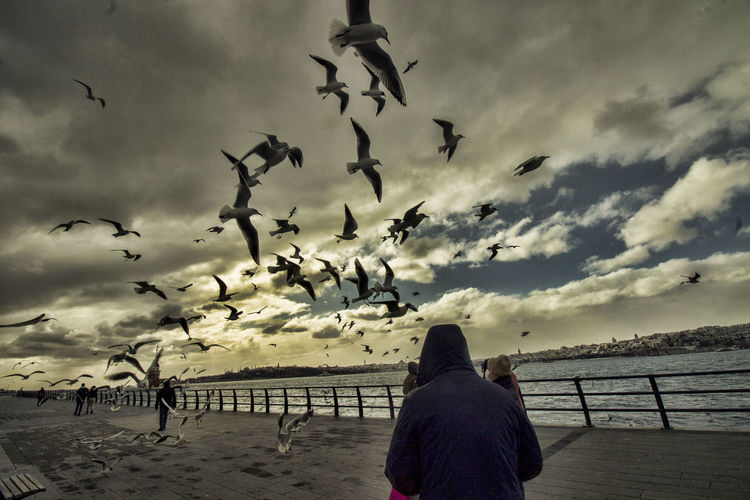 Rear view of seagulls flying against sky