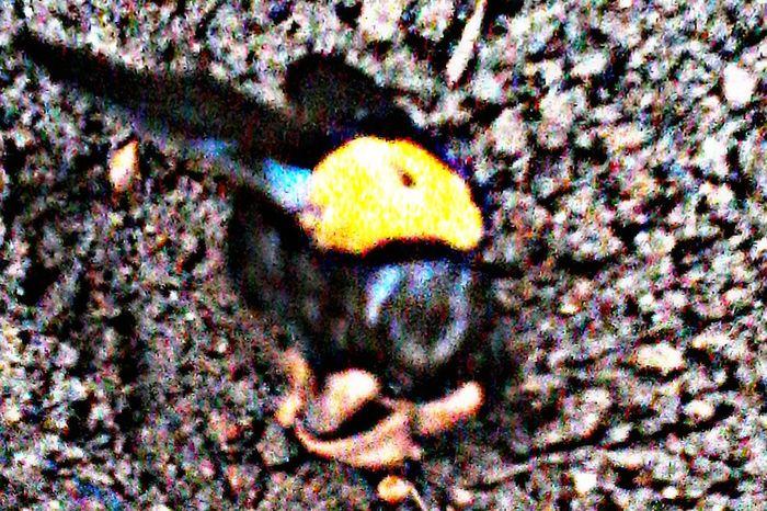 Macro Beauty Nature Photography EyeEm Best Shots - Nature Getty Images Showcase : January My Best Photo 2016 Bugs Buggy Bug Portrait Bugslife Mobile_photographer Image Overlaying Overlay Bug Hunting Maskingbeauty HDR Effect Save The Nature
