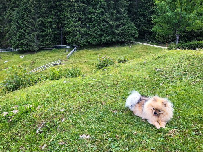 Small fluffy dog in nature Dog On Grass Dog Bone Resting Dog Brown Little Dog Hiking Dog Happy Dog Furry Dog Small Dog Dog Grass Plant Animal Themes Green Color Animal One Animal Mammal Pets Domestic Nature Dog No People Domestic Animals Land