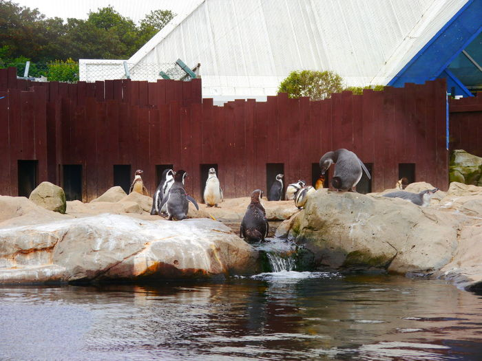 Animal Themes Animal Wildlife Architecture Bird Day Humboldt Penguin Mammal Nature No People Outdoors Sealifecentre Water