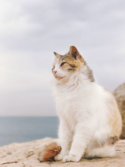 Pet Portraits Pets Domestic Cat Domestic Animals One Animal Animal Themes Mammal Feline Sitting No People Outdoors Day Nature Sky מייחתול ShotOnIphone מייים IPhone7Plus Shotoniphone7plus מייאייפון7 מייבתגלים