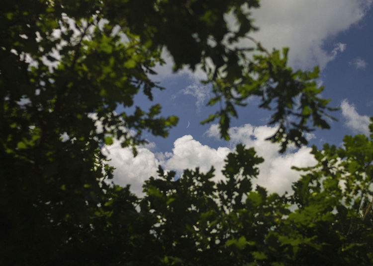 Plant Tree Sky Cloud - Sky Nature Day Growth No People Low Angle View Outdoors Beauty In Nature Tranquility Green Color Branch Leaf Plant Part Selective Focus Tranquil Scene Scenics - Nature