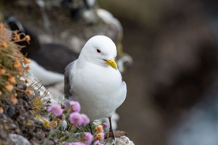 Close-up of white bird perching on a flower