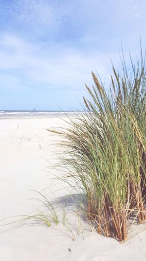 Beach Sand Sand Dune Marram Grass Nature Sea Outdoors Tide Day Water Sky No People Travel Destinations Thank You For Liking