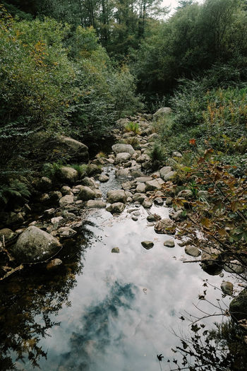 Ireland Ireland🍀 Land Landscape Plant Tree Water Beauty In Nature Nature Tranquility Forest No People Growth Day Scenics - Nature Downloading Rock Tranquil Scene Non-urban Scene Solid High Angle View Stream - Flowing Water Flowing Water Outdoors Flowing Shallow