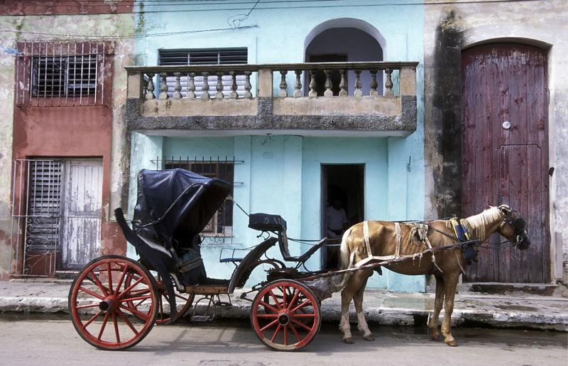 Horse cart outside buildings