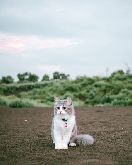 Portrait of a cat on the field