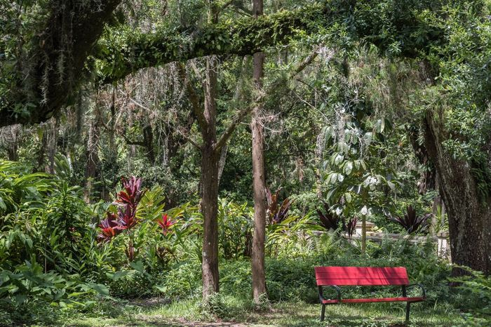 Red Bench Trees Growth Nature Tranquility Day Green Color Plant No People Outdoors Tranquil Scene Chair Red Beauty In Nature Scenics Grass