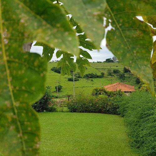 pedacinho do céu, pedacito de cielo, piece of sky. Green Color No People Nature Day Close-up Leaf