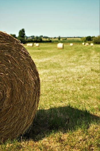 depth of field Agriculture Bale  Day Environment Farm Field Grass Green Color Hay Land Landscape Nature No People Outdoors Plant Rolled Up Rural Scene Scenics - Nature Sky Tranquil Scene Tranquility