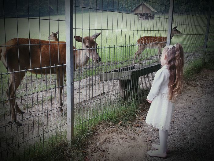 Who is watching whom and fenced in? Little Girl Reh Wildpark Wildlife & Nature Fenced In Check This Out Showcase August Ladyphotographerofthemonth