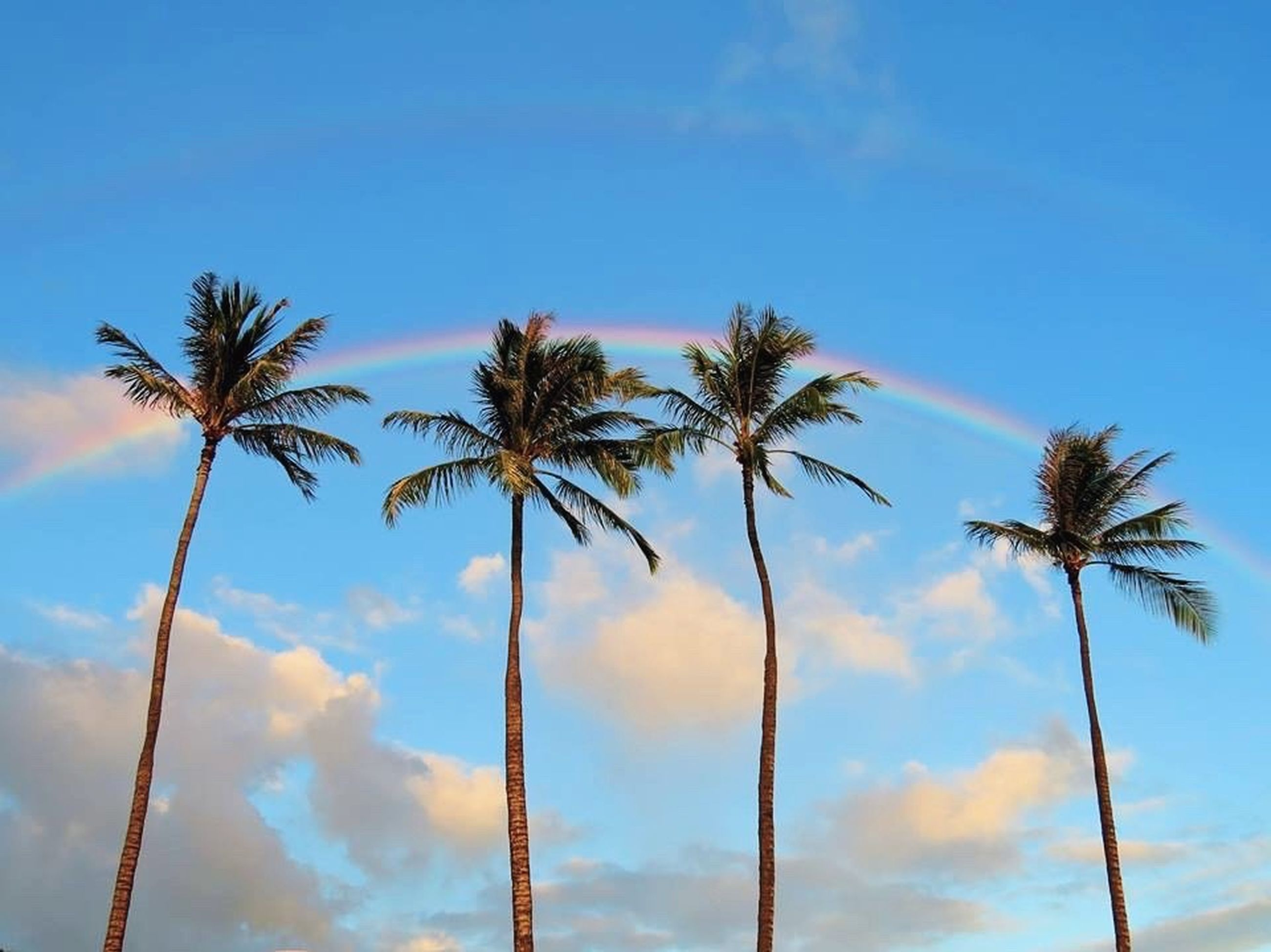 palm tree, low angle view, sky, tree, blue, tree trunk, growth, tranquility, nature, cloud - sky, silhouette, beauty in nature, tall - high, cloud, coconut palm tree, scenics, outdoors, no people, day, tranquil scene