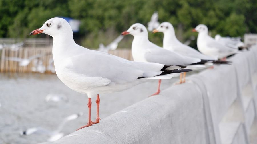 Seagulls perching on railing