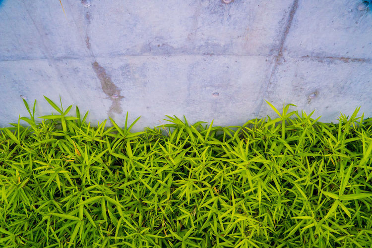EyeEm Nature Lover EyeEmNewHere Architecture Beauty In Nature Building Exterior Built Structure City Close-up Concrete Contrasting Colors Day Field Grass Green Color Growth High Angle View Leaf Nature No People Outdoors Plant Street Streetphotography Wall Wall - Building Feature The Street Photographer - 2018 EyeEm Awards