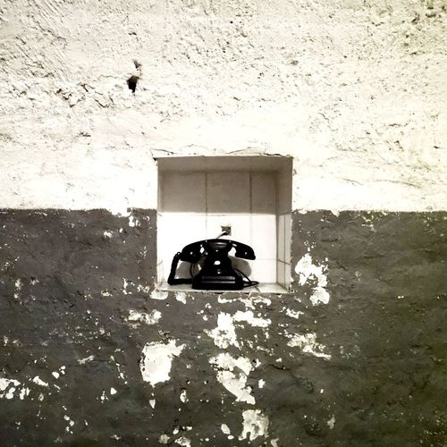 View of a bird against wall