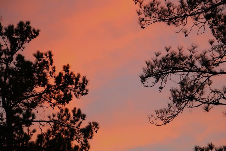 Canon Photography Sunset Orange Color Tree Beauty In Nature Through The Lens Throughmyeyes Branch Sky Nature Growth Scenics Low Angle View Outdoors No People Tranquility