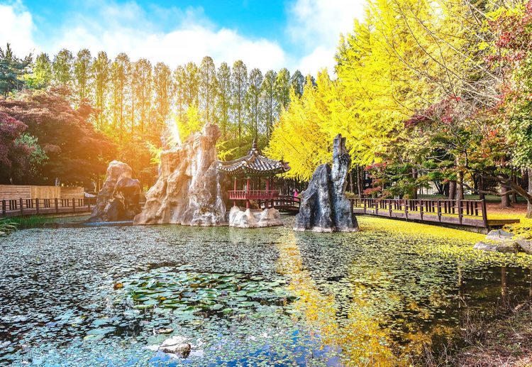 Beautiful autumn scenery around Nami Island, South Korea Architecture Beauty In Nature Building Exterior Built Structure Change Cloud - Sky Day Flowing Flowing Water Fountain Growth Lake Nature No People Outdoors Park Plant Sky Spraying Travel Destinations Tree Water Waterfront