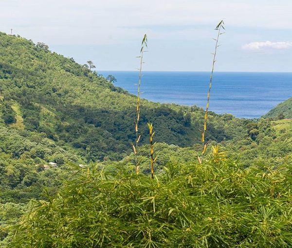 Grenada Landscape_captures IshootGND Ilivewhereyouvacation PureGrenada Golden_click Ig_caribbean Amazingphotohunter Bushments Loves_caribbeansea Teamnikon Ig_grenada Uncoveryours Views Goldeneye Rural_love RuralGND
