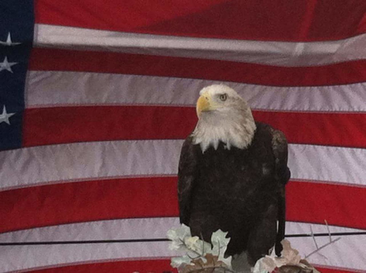 patriotism, bird, flag, one animal, no people, animal themes, close-up, outdoors, day, bald eagle, domestic animals