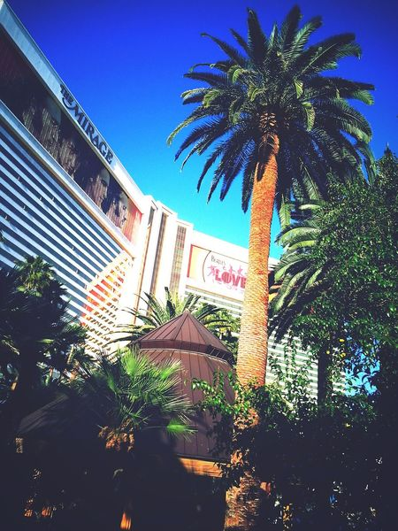 Amazing Architecture Vegas Baby Palm Trees Living It Up  Casinos Amazing View Aesthetic First Eyeem Photo