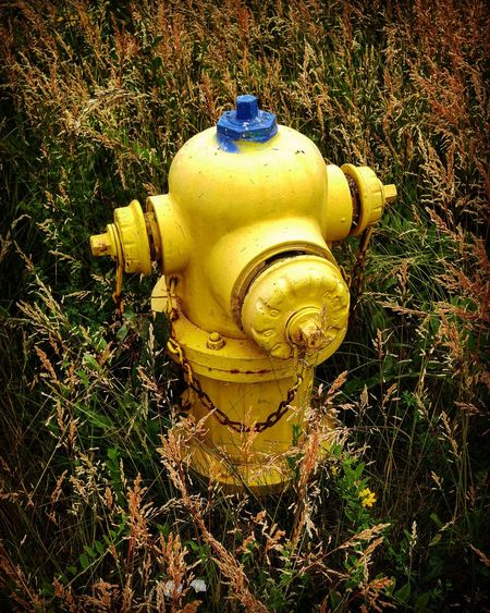 Fire Hydrant Yellow Blue Surrounded By Nature Weeds Grassy Alone